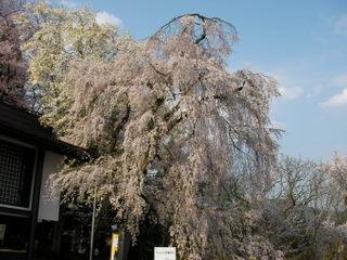 201005-yamagata (5).jpg